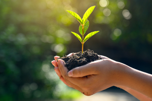 person holding a seedling