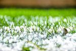 close up of hail on grass