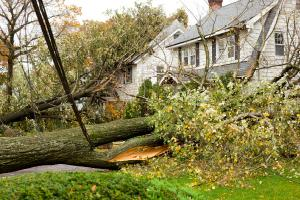trees fallen and homes damaged from hurricane storm